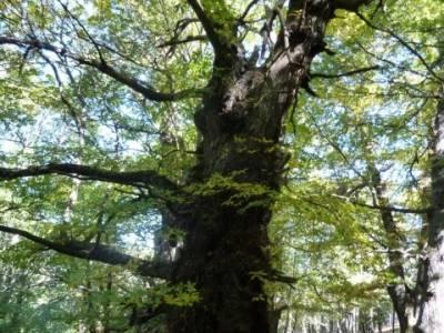 El Castañar de El Tiemblo , Un bosque mágico;asociaciones de senderismo en madrid
